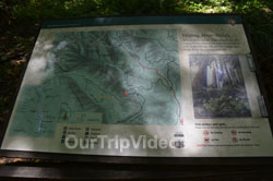 Muir Woods National Monument, Mill Valley, CA, USA - Picture 100