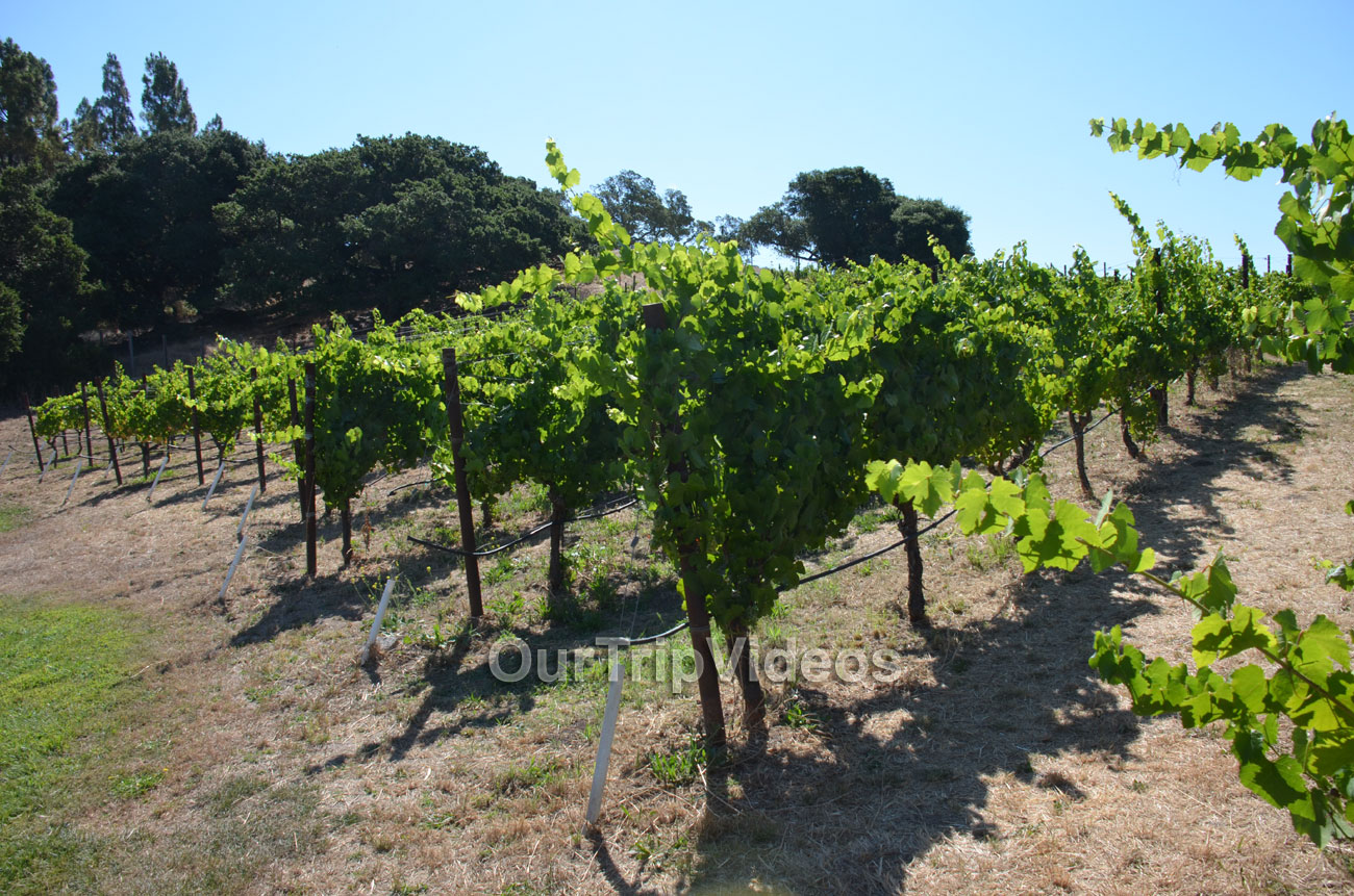 Napa and Sonoma Wine Country Tour, Napa, CA, USA - Picture 4 of 25