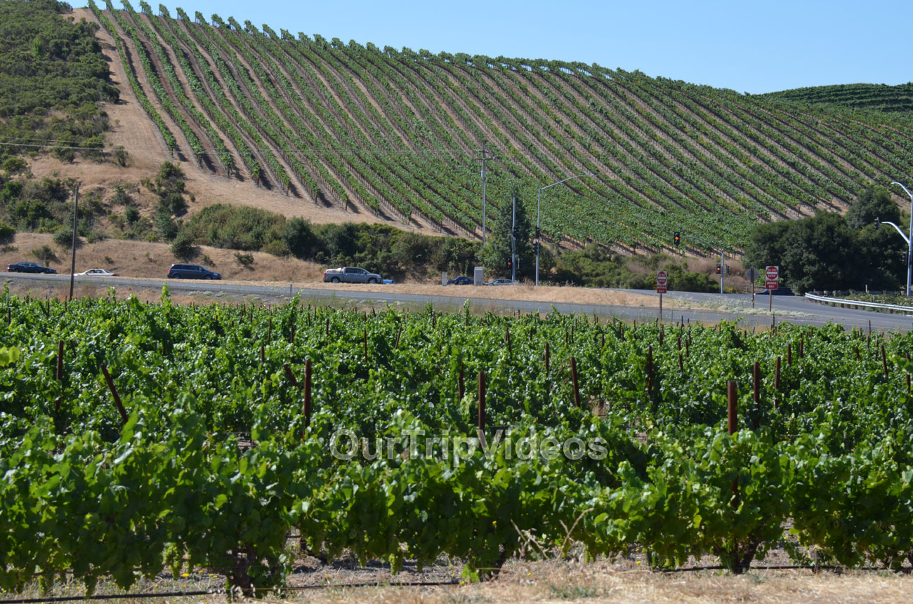 Napa and Sonoma Wine Country Tour, Napa, CA, USA - Picture 9 of 25