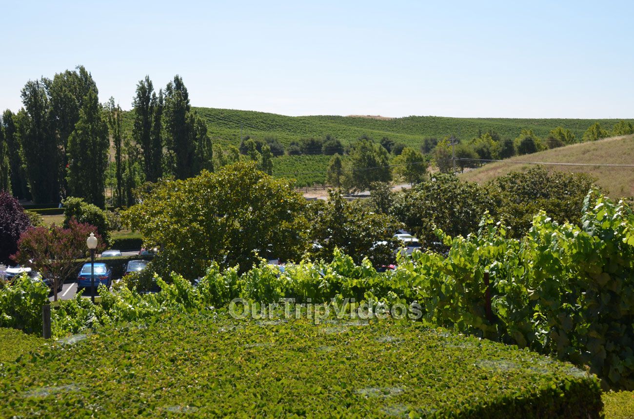 Napa and Sonoma Wine Country Tour, Napa, CA, USA - Picture 15 of 25
