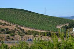 Napa and Sonoma Wine Country Tour, Napa, CA, USA - Picture 2