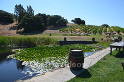 Napa and Sonoma Wine Country Tour, Napa, CA, USA - Picture 7