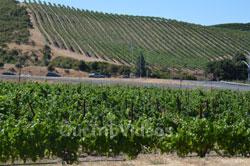Napa and Sonoma Wine Country Tour, Napa, CA, USA - Picture 9