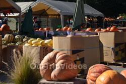 Art and Pumpkin Festival(Parade), Half Moon Bay, CA, USA - Picture 1