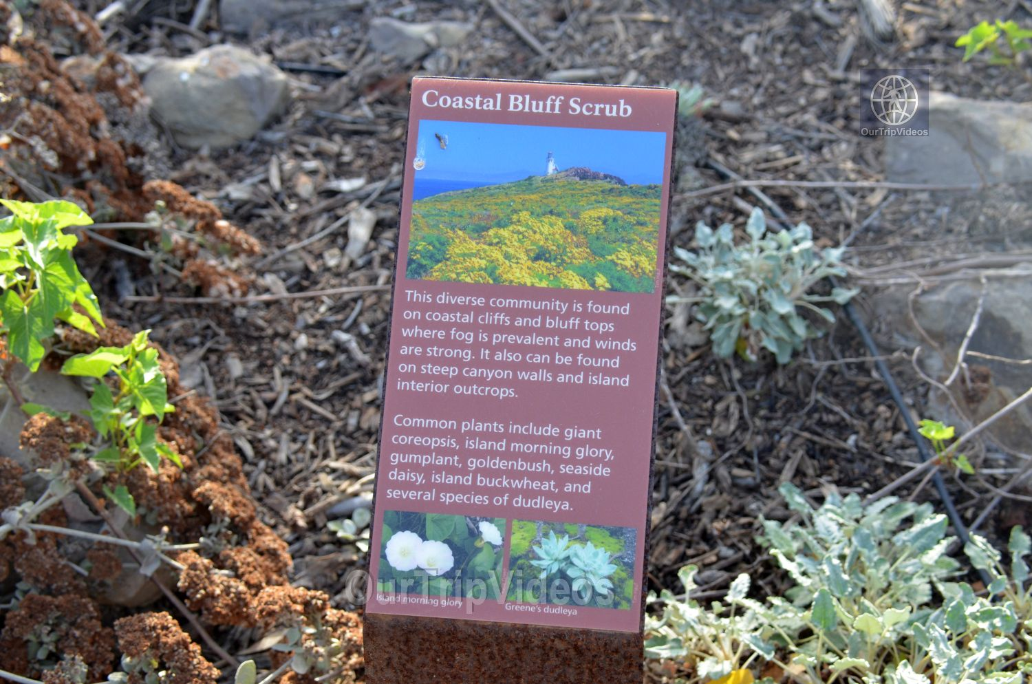 The Robert JL Visitor Center and Harbor cove beach, Ventura, CA, USA - Picture 16 of 25