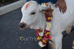 Sri Rama Navami Celebrations at Sri Krishna Balaram Mandir, Sunnyvale, CA, USA - Picture 8