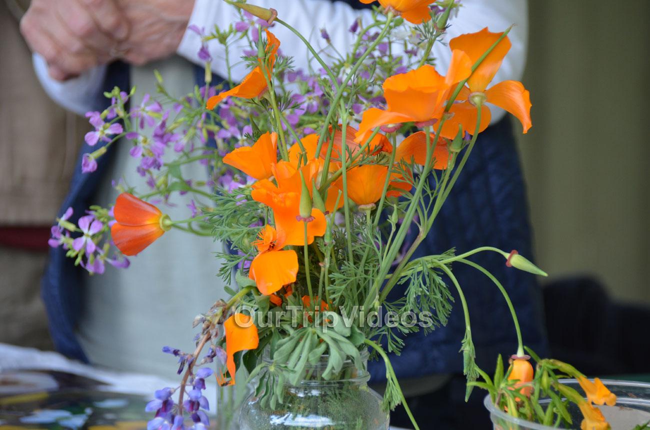 Sunol Wildflower Festival, Sunol, CA, USA - Picture 17 of 25
