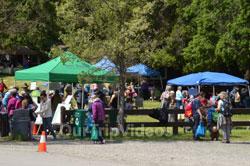 Sunol Wildflower Festival, Sunol, CA, USA - Picture 5