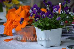 Sunol Wildflower Festival, Sunol, CA, USA - Picture 18