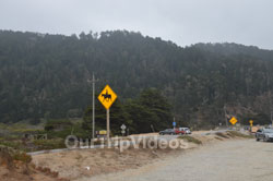 Big Basin Redwoods State Park - Waddell Beach, Davenport, CA, USA - Picture 11