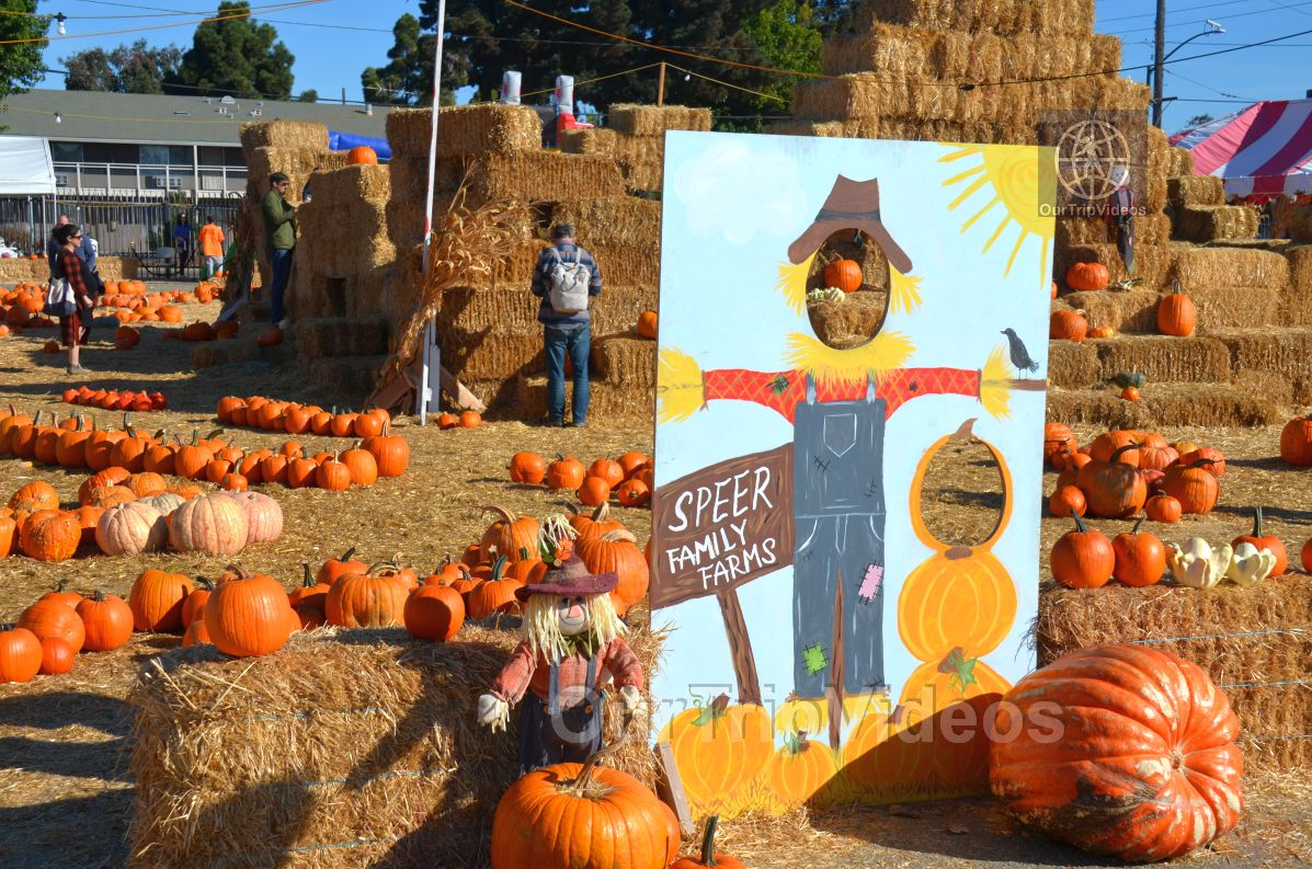 The Alameda Point Pumpkin Patch, Alameda, CA, USA - Picture 1 of 25