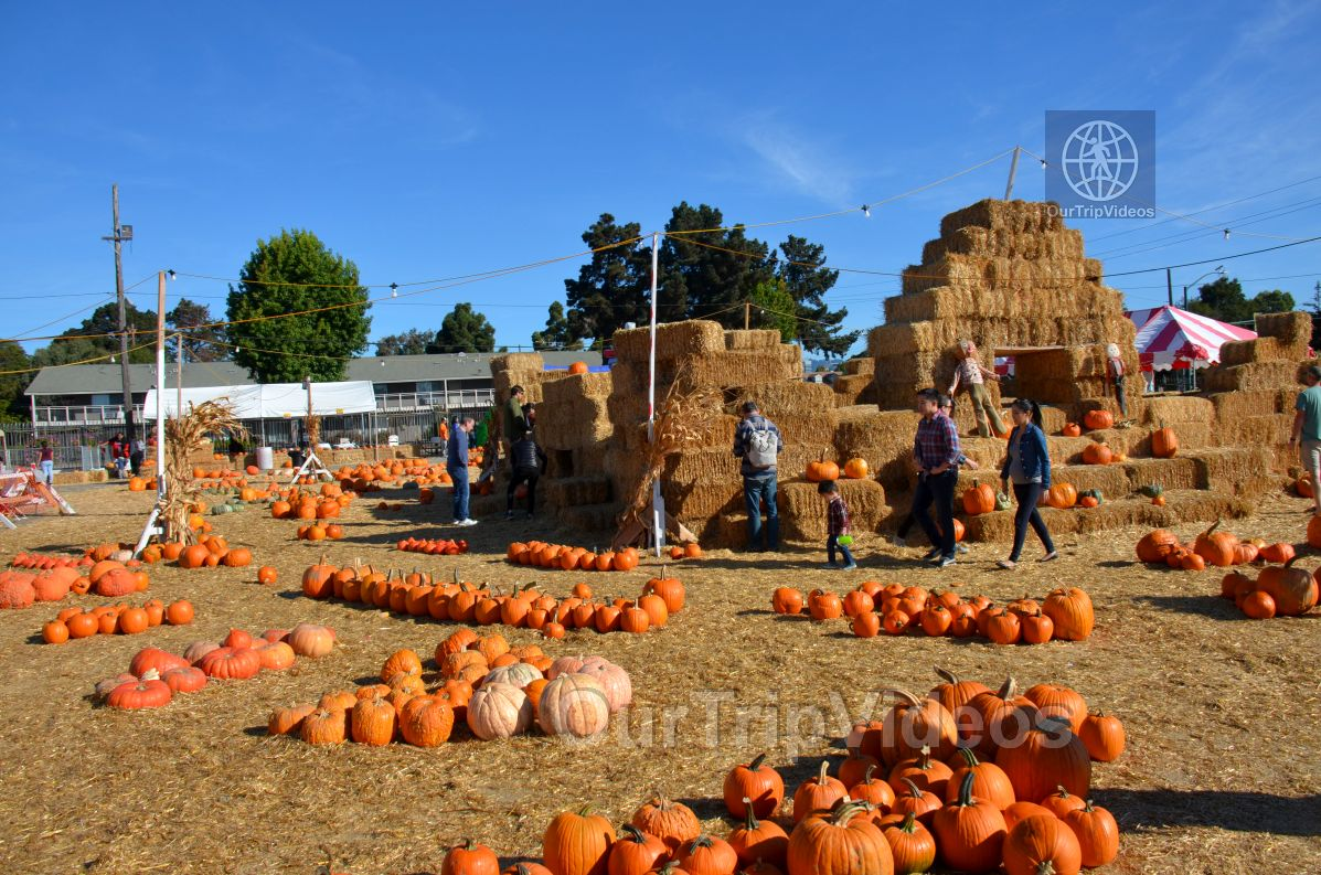 The Alameda Point Pumpkin Patch, Alameda, CA, USA - Picture 2 of 25