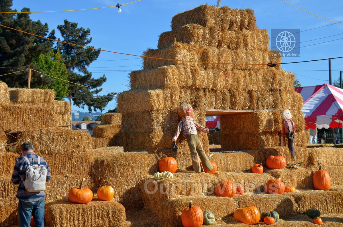 The Alameda Point Pumpkin Patch, Alameda, CA, USA - Picture 3 of 25