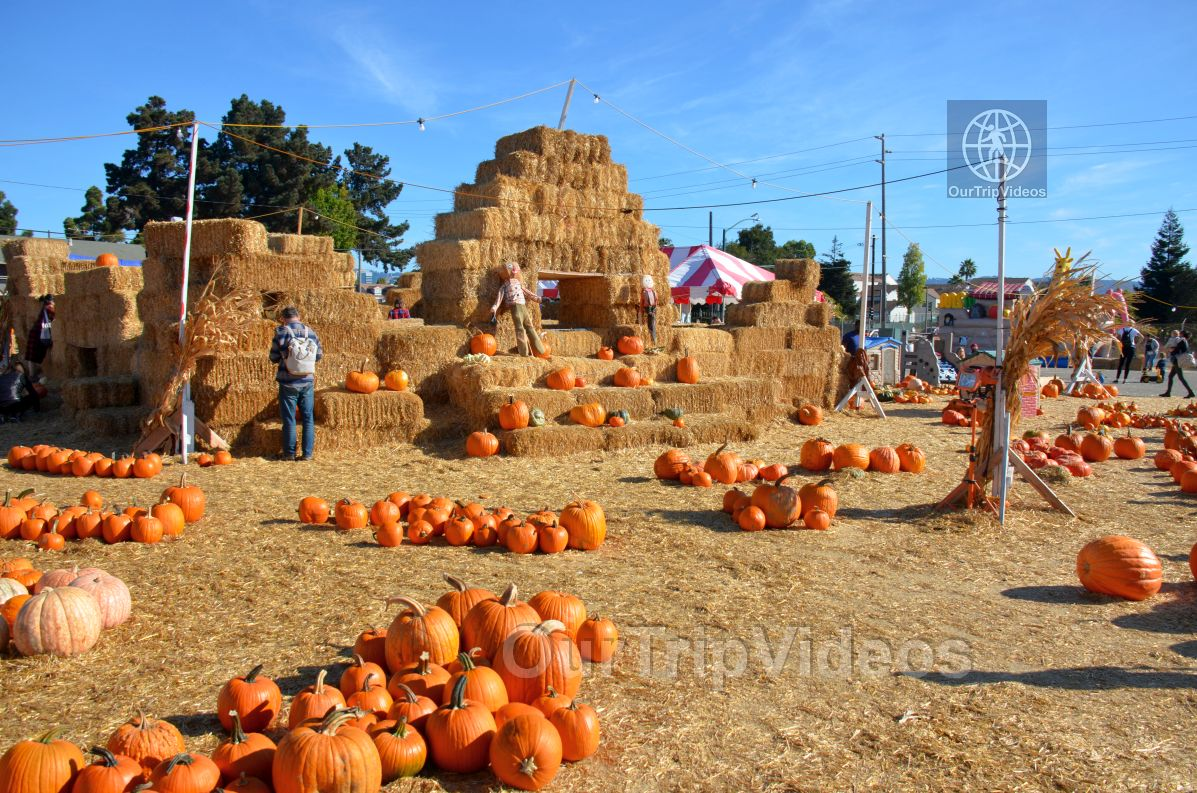 The Alameda Point Pumpkin Patch, Alameda, CA, USA - Picture 6 of 25