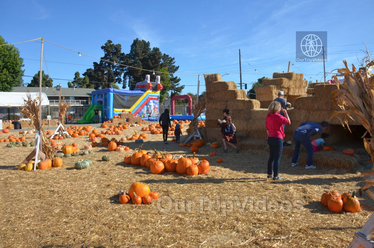 The Alameda Point Pumpkin Patch, Alameda, CA, USA - Picture 8 of 25