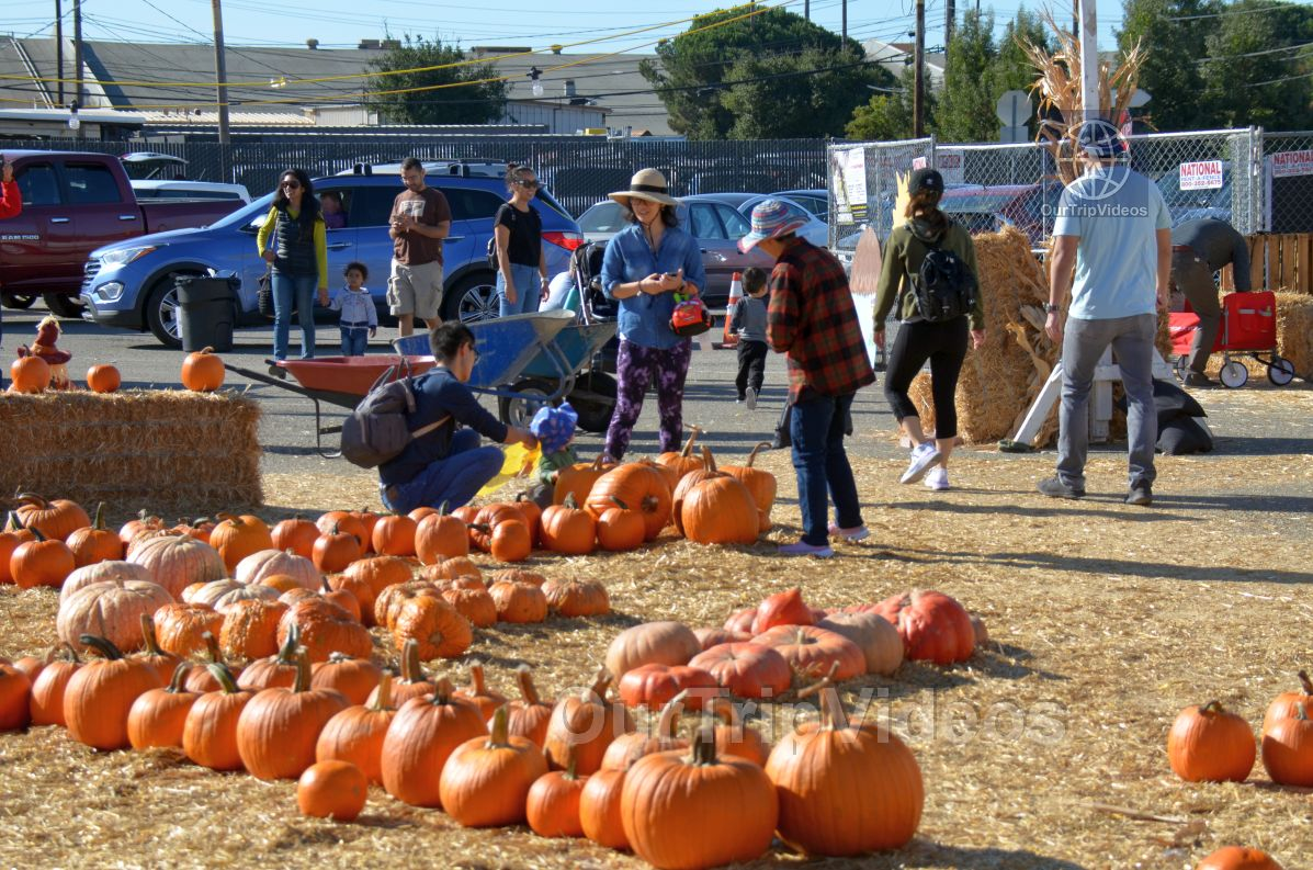 The Alameda Point Pumpkin Patch, Alameda, CA, USA - Picture 9 of 25