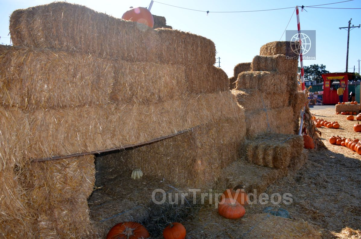 The Alameda Point Pumpkin Patch, Alameda, CA, USA - Picture 10 of 25