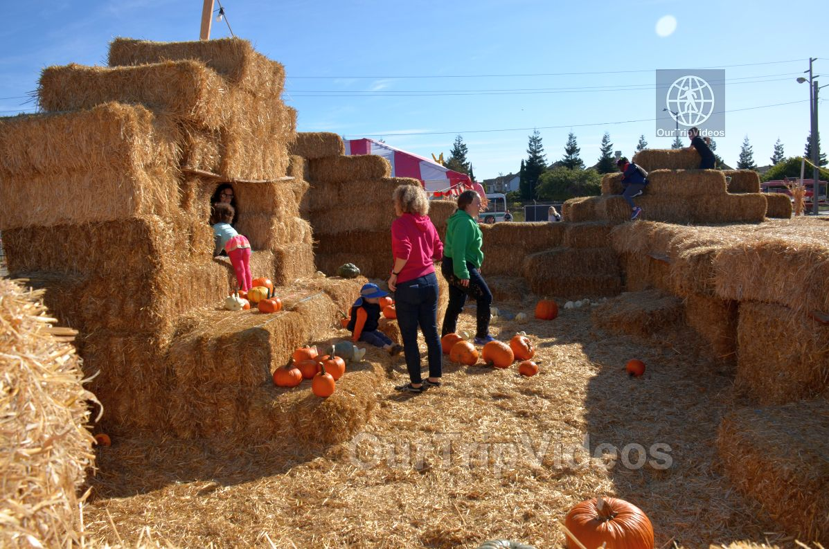 The Alameda Point Pumpkin Patch, Alameda, CA, USA - Picture 11 of 25