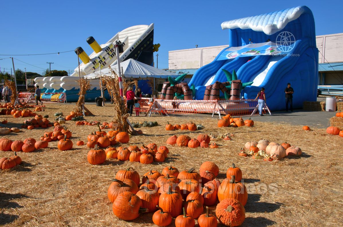 The Alameda Point Pumpkin Patch, Alameda, CA, USA - Picture 16 of 25