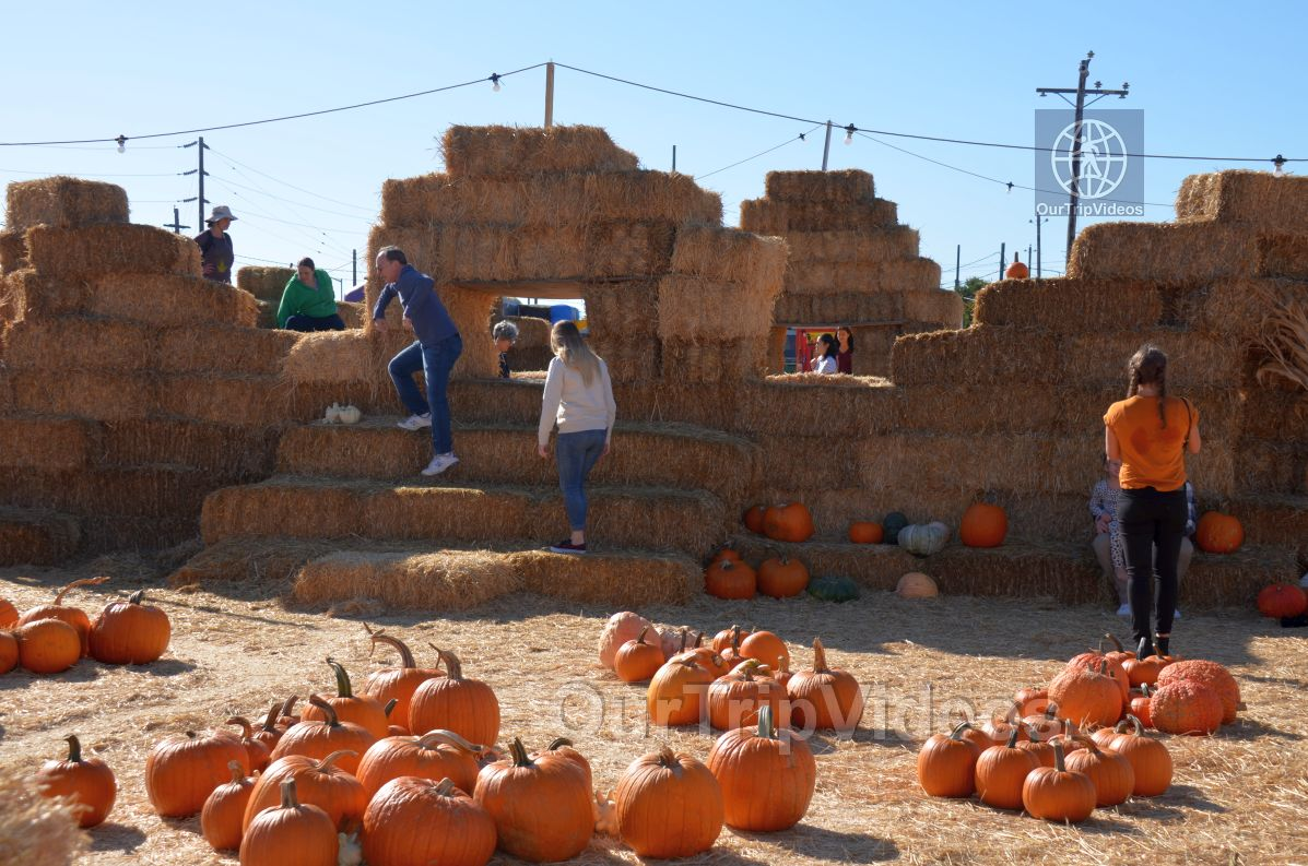 The Alameda Point Pumpkin Patch, Alameda, CA, USA - Picture 18 of 25