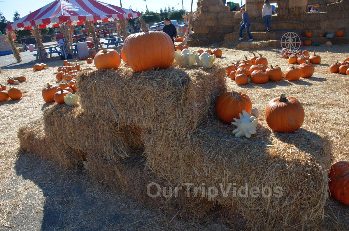 The Alameda Point Pumpkin Patch, Alameda, CA, USA - Picture 19 of 25