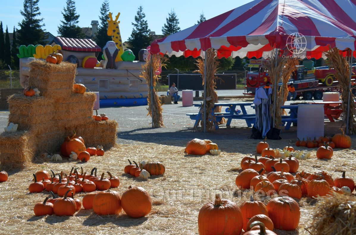The Alameda Point Pumpkin Patch, Alameda, CA, USA - Picture 20 of 25