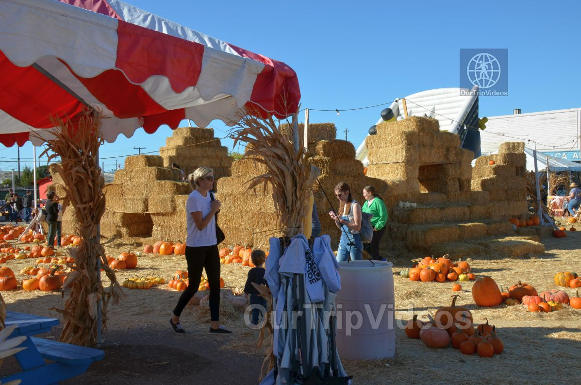 The Alameda Point Pumpkin Patch, Alameda, CA, USA - Picture 23 of 25