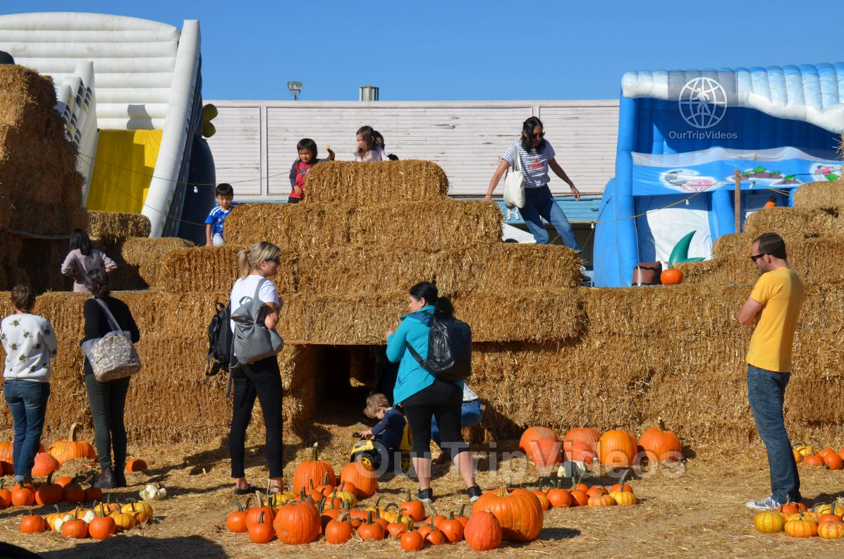 The Alameda Point Pumpkin Patch, Alameda, CA, USA - Picture 28 of 50