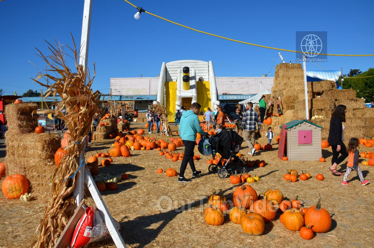 The Alameda Point Pumpkin Patch, Alameda, CA, USA - Picture 30 of 50