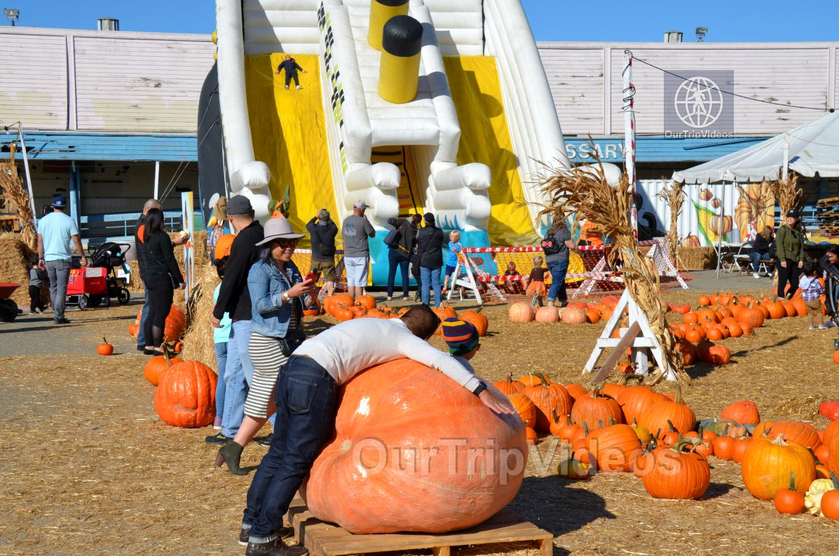 The Alameda Point Pumpkin Patch, Alameda, CA, USA - Picture 33 of 50
