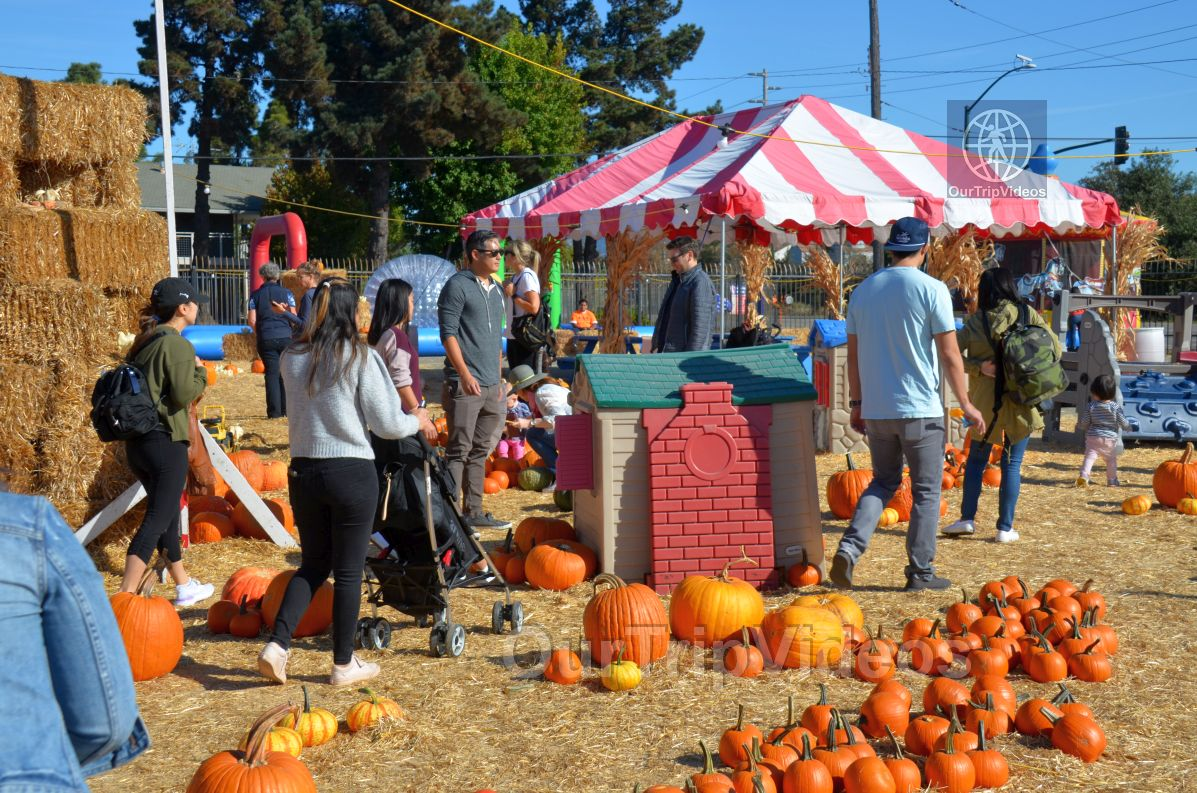 The Alameda Point Pumpkin Patch, Alameda, CA, USA - Picture 34 of 50