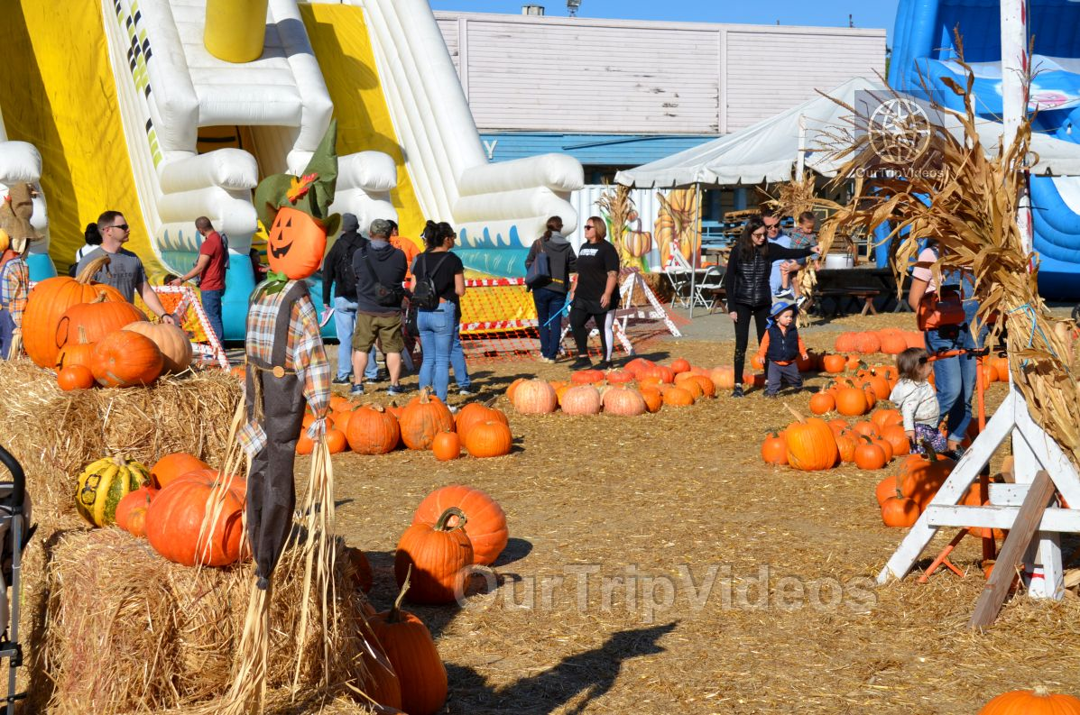 The Alameda Point Pumpkin Patch, Alameda, CA, USA - Picture 35 of 50