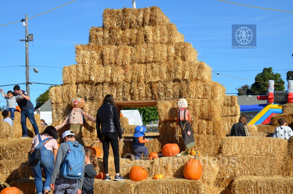 The Alameda Point Pumpkin Patch, Alameda, CA, USA - Picture 36 of 50