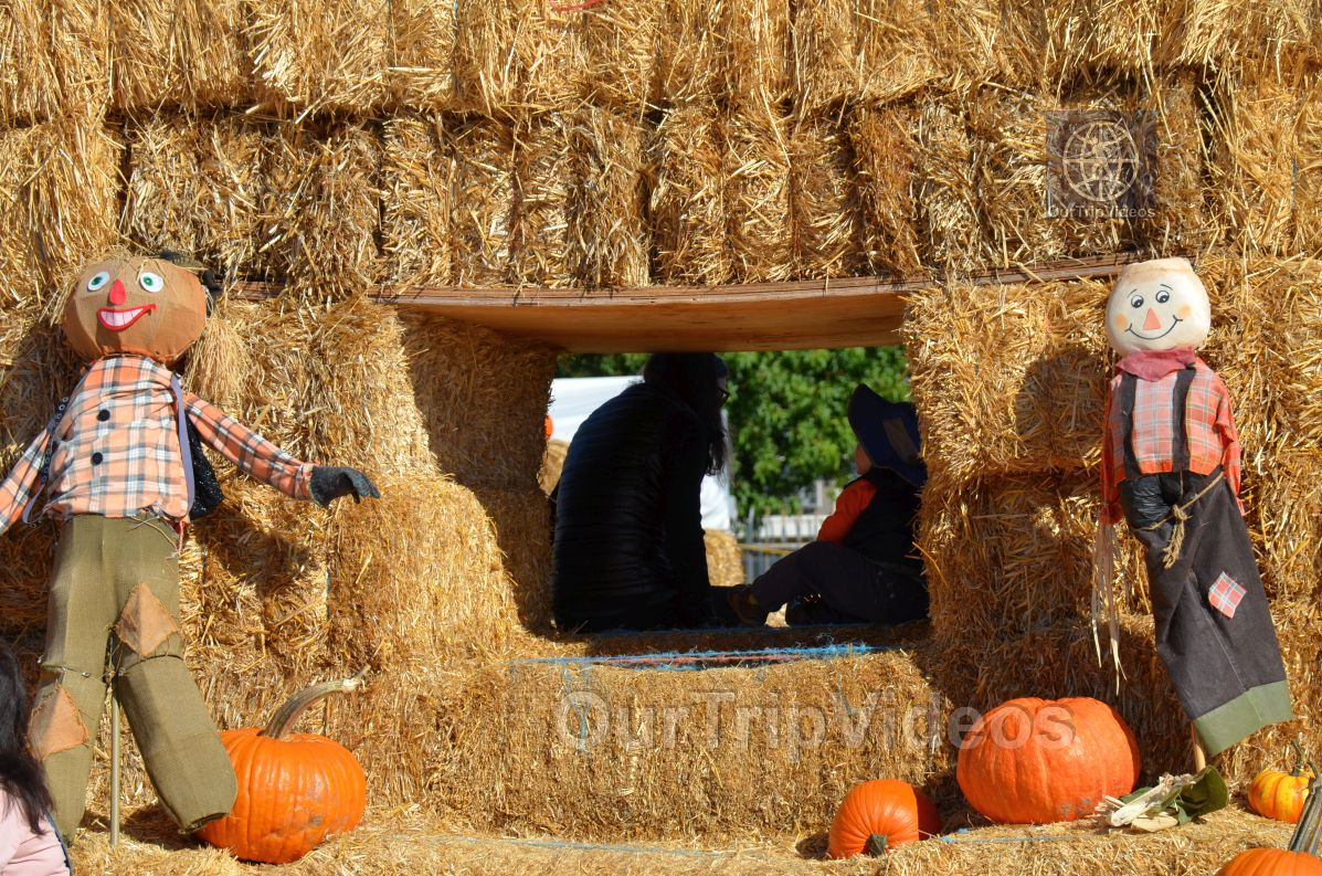 The Alameda Point Pumpkin Patch, Alameda, CA, USA - Picture 37 of 50