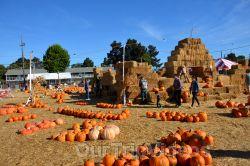 The Alameda Point Pumpkin Patch, Alameda, CA, USA - Picture 2