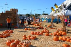 The Alameda Point Pumpkin Patch, Alameda, CA, USA - Picture 17