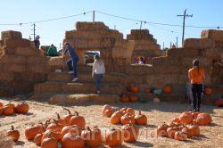 The Alameda Point Pumpkin Patch, Alameda, CA, USA - Picture 18