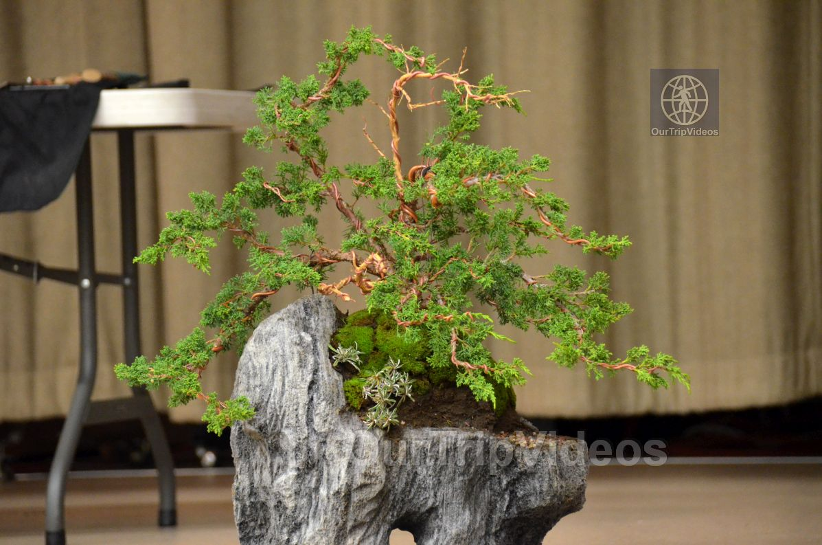 Annual Bonsai Exhibition, Union City, CA, USA - Picture 5 of 25