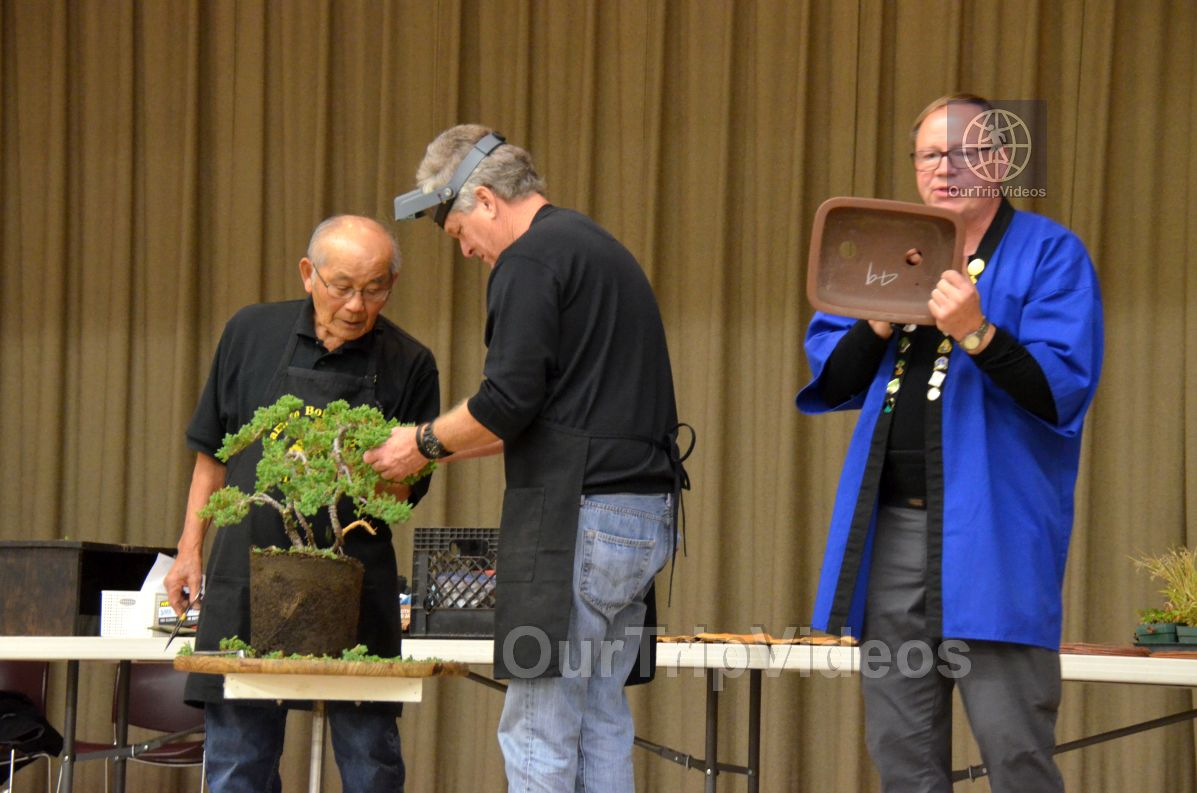 Annual Bonsai Exhibition, Union City, CA, USA - Picture 6 of 25
