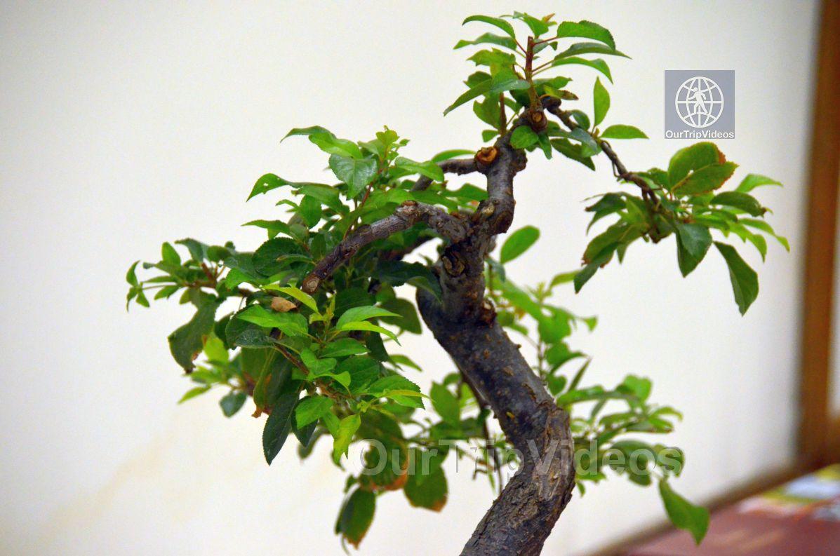 Annual Bonsai Exhibition, Union City, CA, USA - Picture 7 of 25
