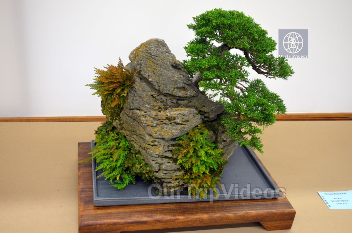 Annual Bonsai Exhibition, Union City, CA, USA - Picture 14 of 25