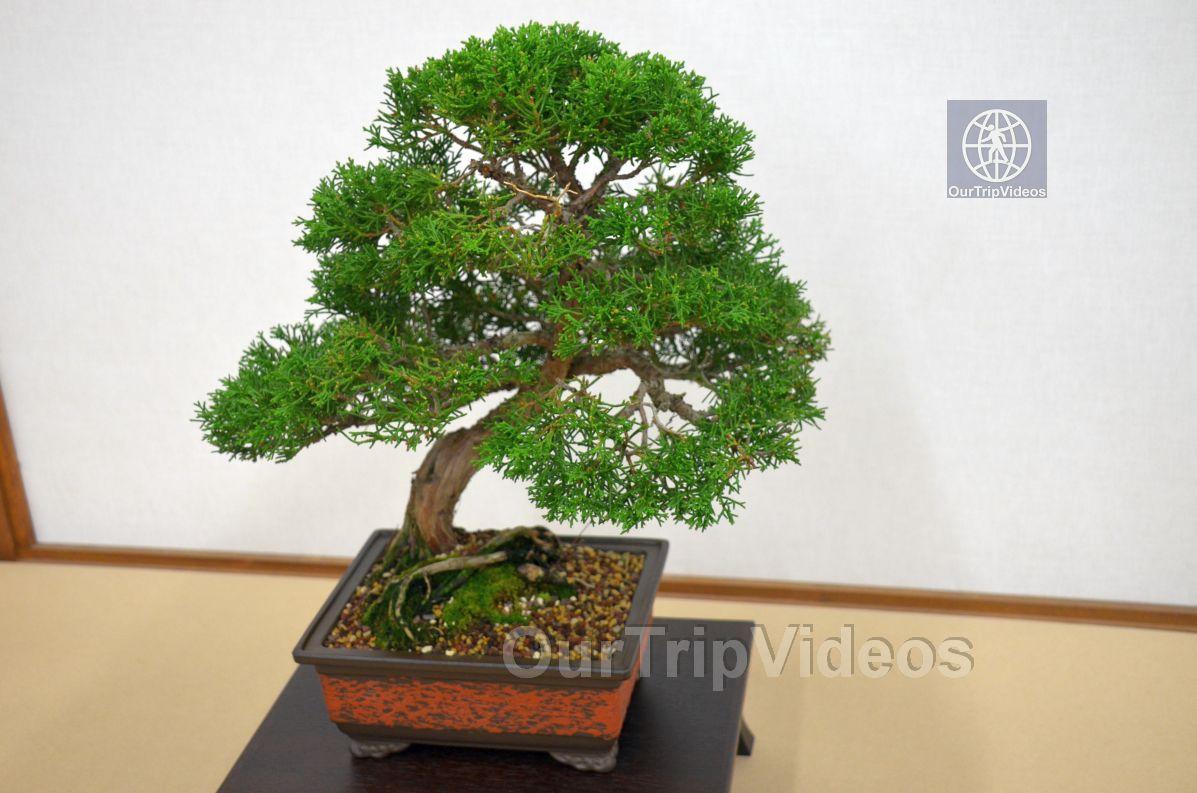 Annual Bonsai Exhibition, Union City, CA, USA - Picture 24 of 25