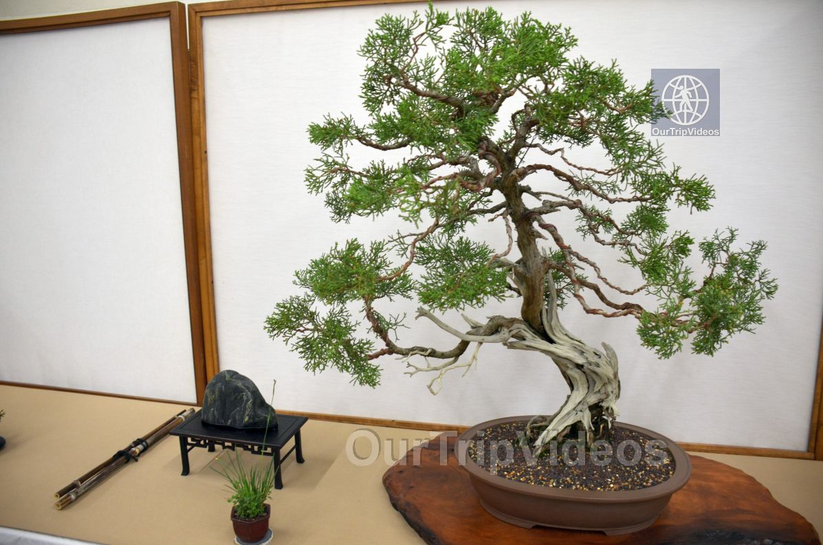 Annual Bonsai Exhibition, Union City, CA, USA - Picture 25 of 25