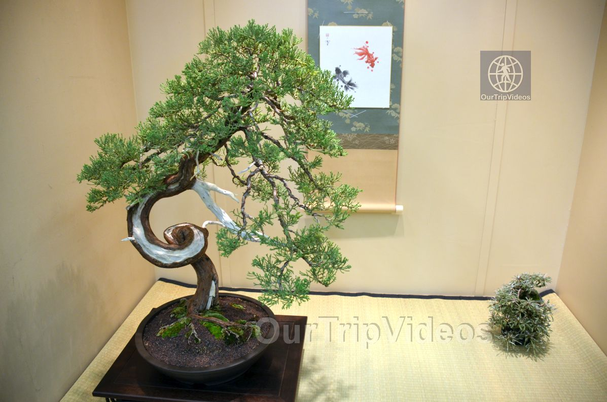 Annual Bonsai Exhibition, Union City, CA, USA - Picture 26 of 50