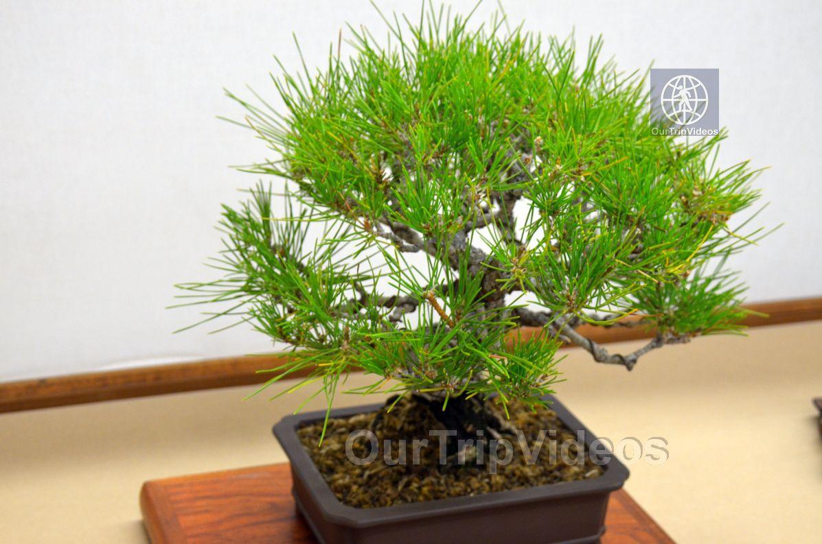 Annual Bonsai Exhibition, Union City, CA, USA - Picture 31 of 50