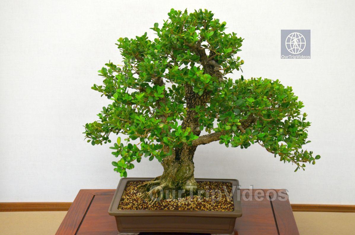 Annual Bonsai Exhibition, Union City, CA, USA - Picture 32 of 50