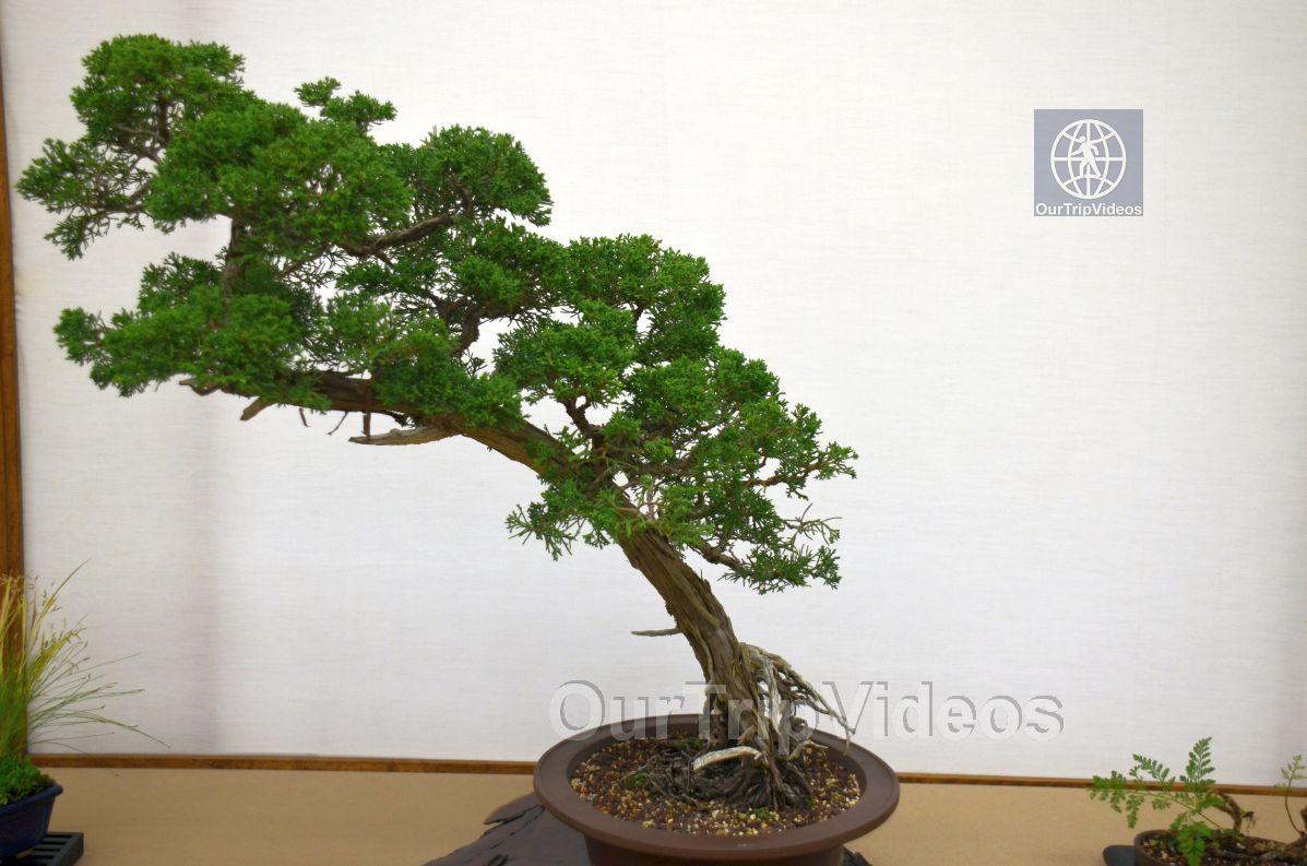 Annual Bonsai Exhibition, Union City, CA, USA - Picture 34 of 50