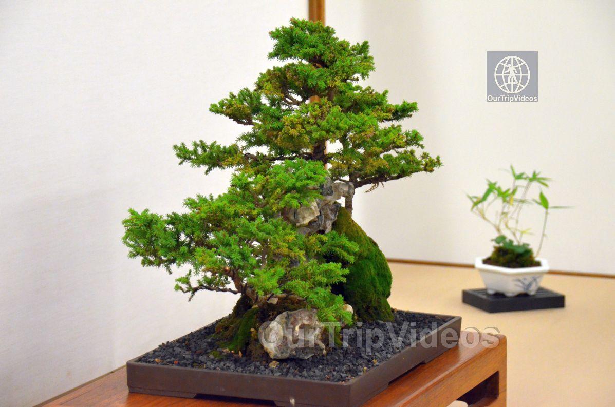 Annual Bonsai Exhibition, Union City, CA, USA - Picture 40 of 50