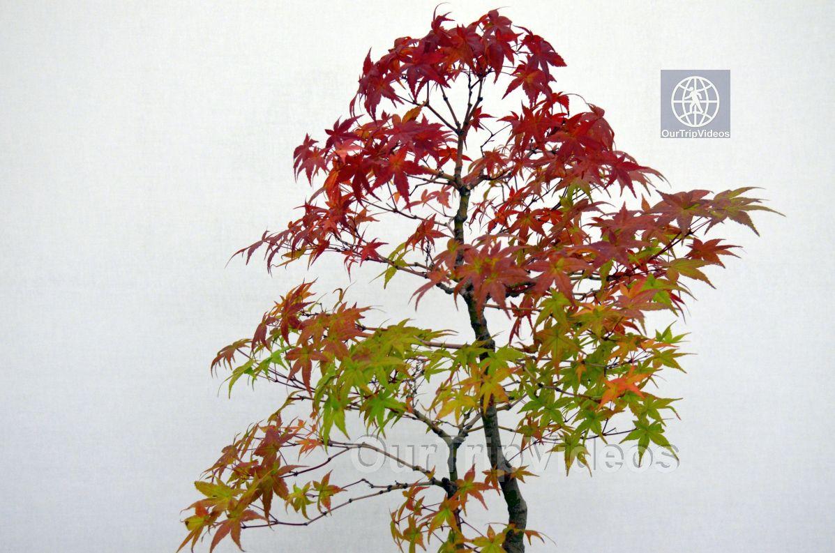 Annual Bonsai Exhibition, Union City, CA, USA - Picture 41 of 50