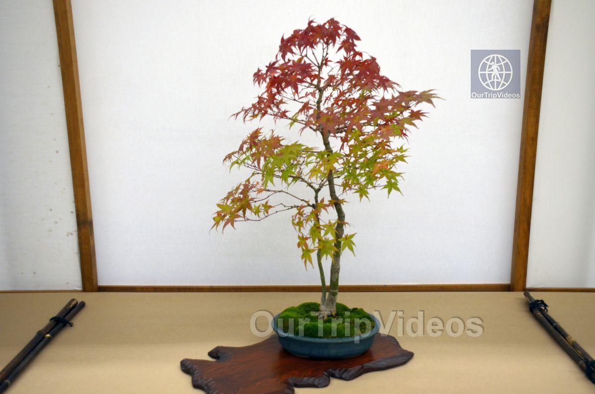 Annual Bonsai Exhibition, Union City, CA, USA - Picture 42 of 50